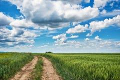 Campo dell'erba verde e della strada non asfaltata fresche della molla fotografia stock