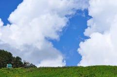 Campo dell'erbaccia del girasole messicano con cielo blu Fotografia Stock Libera da Diritti