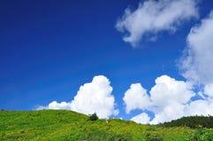 Campo dell'erbaccia del girasole messicano con cielo blu Immagini Stock Libere da Diritti