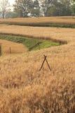 Campo dell'orzo di agricoltura Immagini Stock Libere da Diritti