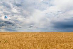 Campo dell'orzo prima della tempesta Fotografia Stock Libera da Diritti
