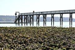 Campo dell'ostrica Immagini Stock