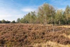 Campo della brughiera del parco nazionale olandese Veluwe Fotografie Stock Libere da Diritti