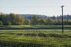 Campo della campagna entro la mattina di primavera Prato con giovane verde Fotografie Stock Libere da Diritti