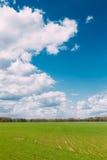 Campo della campagna o paesaggio rurale del prato con erba verde Immagini Stock Libere da Diritti