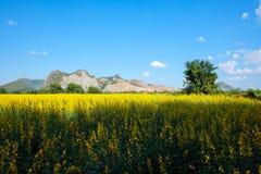 Campo della canapa delle indie con la montagna ed il chiaro fondo del cielo blu immagine stock
