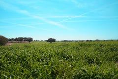 Campo della Florida dei sogni Fotografia Stock