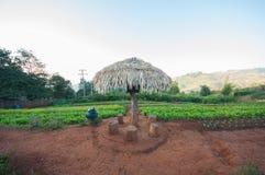 Campo della lattuga nel Nord della Tailandia Immagini Stock Libere da Diritti