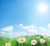 Campo della margherita in giorno di estate pieno di sole. Fotografia Stock