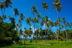Campo della palma Fotografie Stock Libere da Diritti