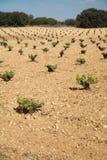 Campo della pianta del vino Fotografia Stock Libera da Diritti