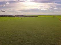 Campo della piantagione della soia Immagine Stock Libera da Diritti