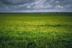 Campo della priorità bassa con la scenetta dell'erba verde Fotografie Stock Libere da Diritti