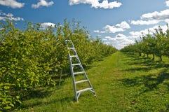 Campo della raccolta del Apple Fotografie Stock Libere da Diritti