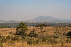 Campo della savana e dell'abetaia Fotografia Stock Libera da Diritti