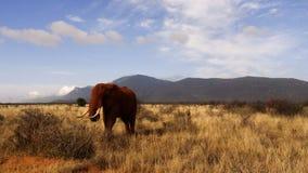 Campo della savanna nella stagione estiva fotografia stock libera da diritti