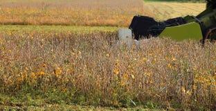 campo della soia e delle mietitrebbiatrici mature durante la raccolta della i Fotografie Stock Libere da Diritti