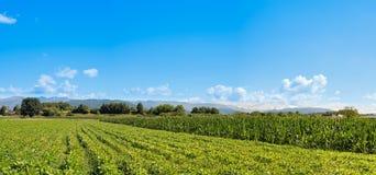 Campo della soia Paesaggio agricolo Immagine Stock Libera da Diritti