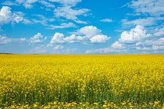 Campo della violenza di fioritura gialla e di un cielo blu immagini stock