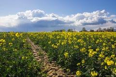 Campo della violenza e cielo nuvoloso Fotografia Stock Libera da Diritti