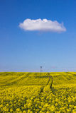 Campo della violenza e cielo nuvoloso Fotografia Stock