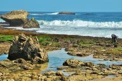 Campo delle alghe selvatiche Fotografia Stock Libera da Diritti