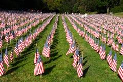 Campo delle bandiere americane durante la festa dell'indipendenza degli Stati Uniti Fotografia Stock