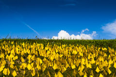 Campo delle bandiere gialle Fotografia Stock Libera da Diritti