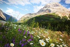 Campo delle margherite e dei fiori selvaggi immagine stock libera da diritti