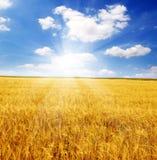 Campo delle orecchie e del cielo del sole Fotografia Stock