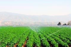 Campo delle verdure Immagine Stock Libera da Diritti