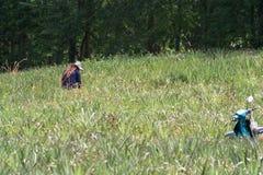 Campo delle verdure con il fondo di lavoro dell'agricoltore rurale Immagini Stock Libere da Diritti