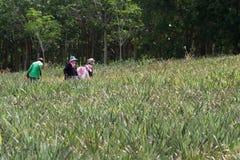 Campo delle verdure con il fondo di lavoro dell'agricoltore rurale Fotografia Stock Libera da Diritti