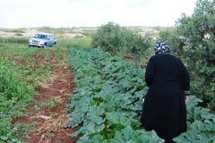 Campo dello zucchini Fotografia Stock Libera da Diritti