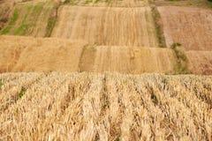 Campo después de cortar el grano en otoño foto de archivo