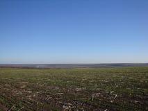 Campo después de cosechar en el cielo azul del fondo fotografía de archivo libre de regalías