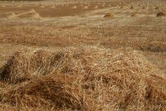 Campo después de la cosecha Imagen de archivo