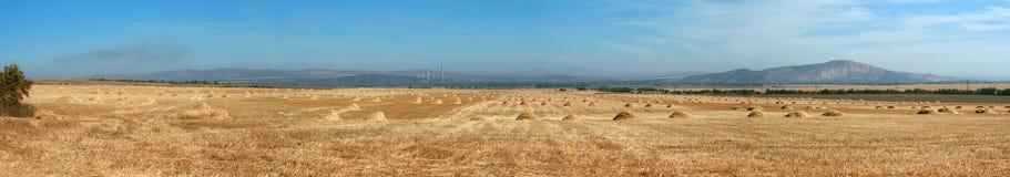 Campo después de la cosecha Foto de archivo