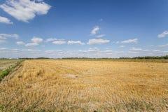 Campo después de la cosecha Fotografía de archivo libre de regalías