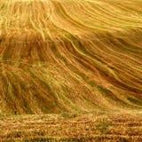 Campo después de la cosecha fotografía de archivo