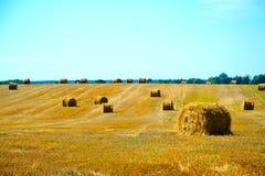 Campo después de la paja de la cosecha Imagenes de archivo
