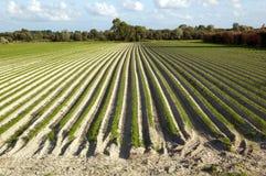 Campo di agricoltura Fotografie Stock Libere da Diritti