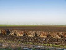 Campo di agricoltura Fotografia Stock