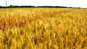 Campo di agricoltura stock footage