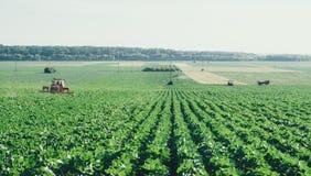 Campo di agricoltura con i trattori distanti nel retro effetto della macchina da presa Immagine Stock Libera da Diritti