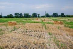 Campo di agricoltura con il cielo Natura rurale nella terra dell'azienda agricola Paglia sul prato Raccolto dorato giallo del gra Fotografie Stock Libere da Diritti