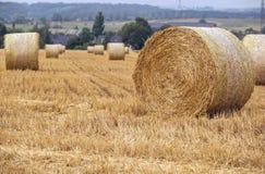 Campo di agricoltura con le pile del fieno Fotografie Stock Libere da Diritti