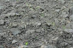 Campo di agricoltura con suolo nero per piantare Struttura della natura Fotografia Stock