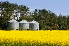 Campo di agricoltura del seme di ravizzone del canola di tre silos Fotografia Stock Libera da Diritti