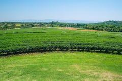Campo di agricoltura del tè verde Fotografie Stock Libere da Diritti